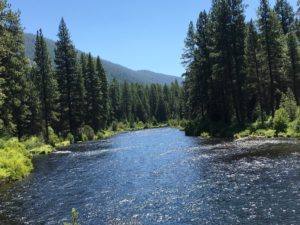 Metolius River Hike