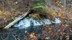 A Chilly Metolius River Hike